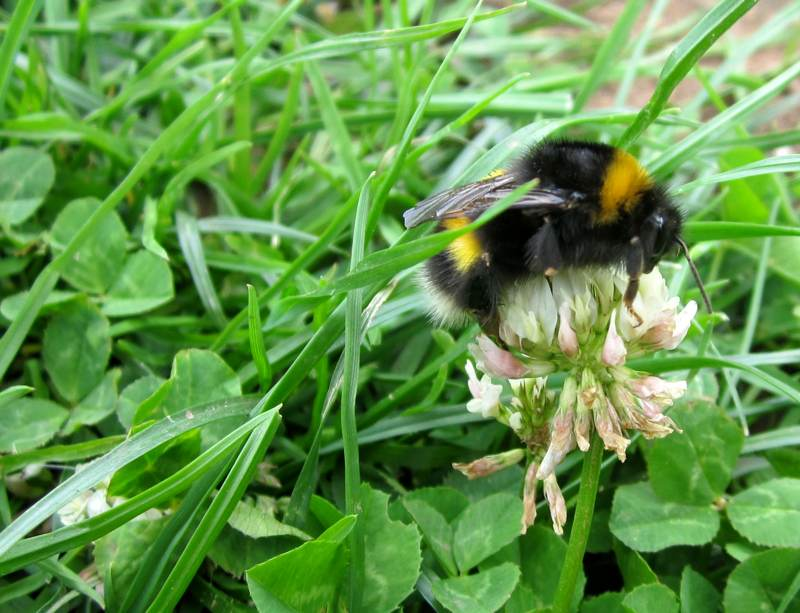 A bee having a tasty meal.