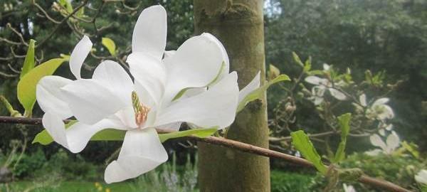 Highdown Gardens West Sussex