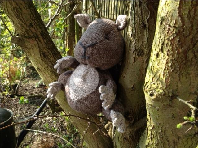 squirrel for woollen woods