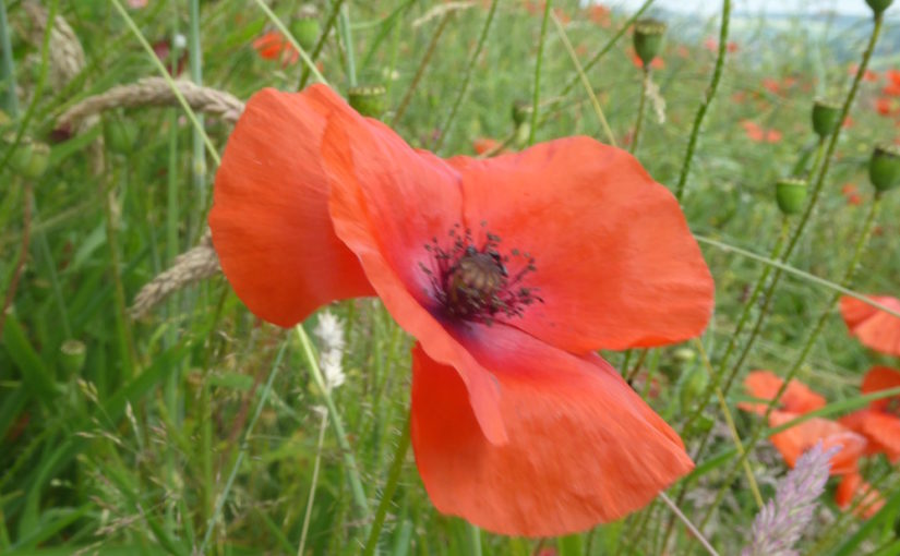 Nature and the Great War