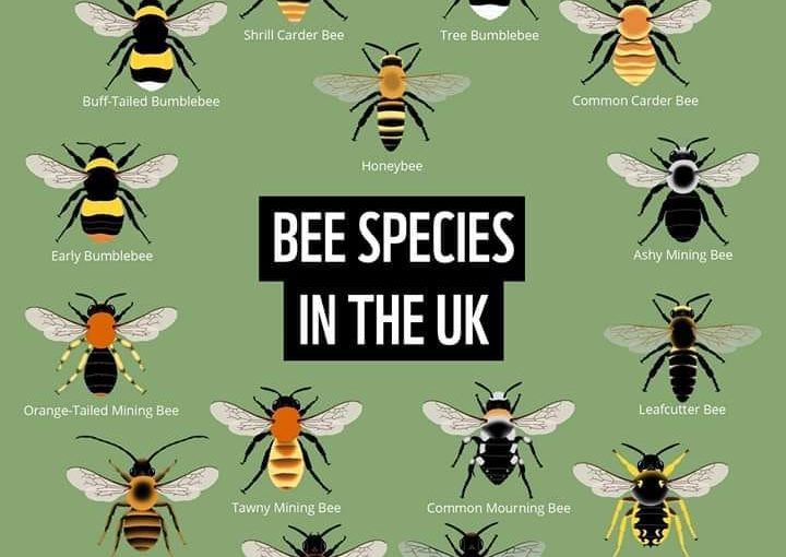 Getting to know Garden Bees